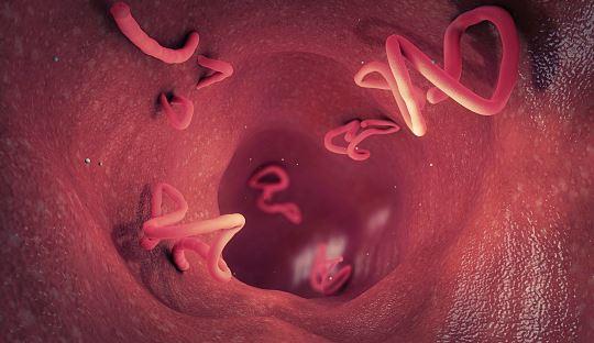 pasożyty w organiżmie zwalczysz Germixil