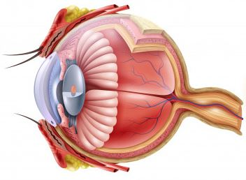 oculax wpływa na pracę gałki ocznej poprawia wzrok