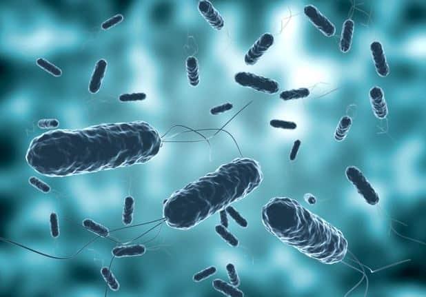 wortex skuteczne tabletki na pasożyty i robaki